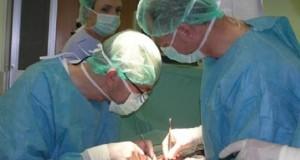 0511_transplantacije