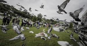 stotine-golubova-pusteno-u-zrak-u-memorijalnom-centru-u-potocarima-s2_5d25eeb4021d4